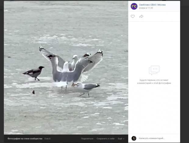 Фото дня: ворона с чайкой выясняли отношения в Свиблове