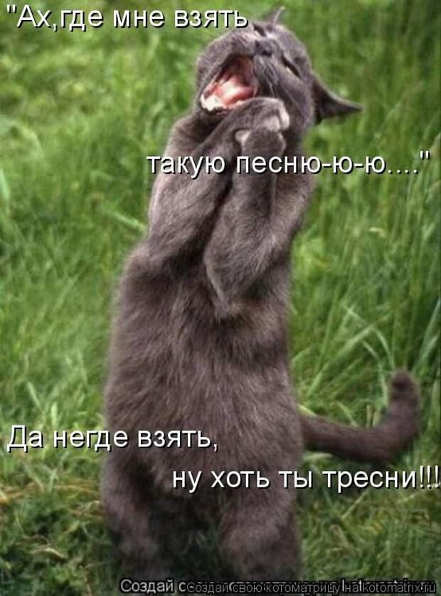 Котоматрица - Мысли вслух :)