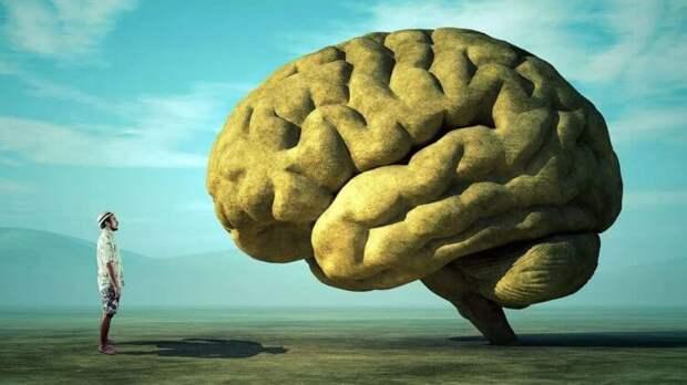 Учёные объяснили, почему мозг у человека крупнее, чем у обезьян
