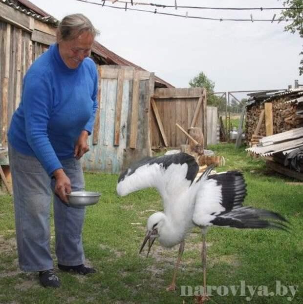 Жители Гомельской области приютили аистенка