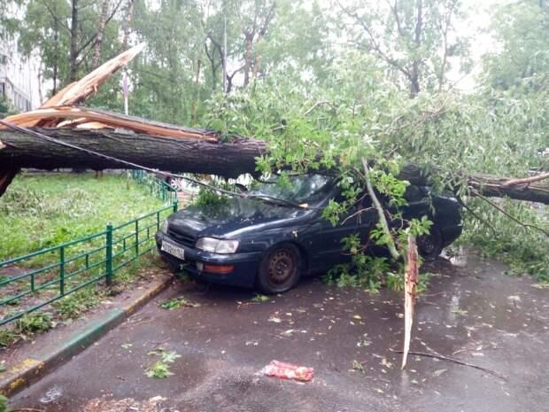 На Пестеля дерево упало на машину из-за сильного ветра