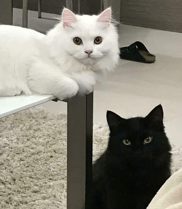 17 чудесных доказательств, что две кошки завсегда лучше одной
