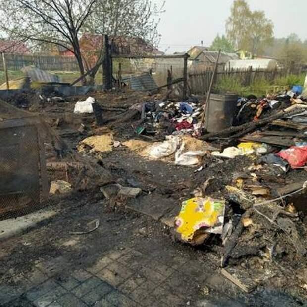 В Билимбае на передержке для бездомных животных сгорели 30 собак