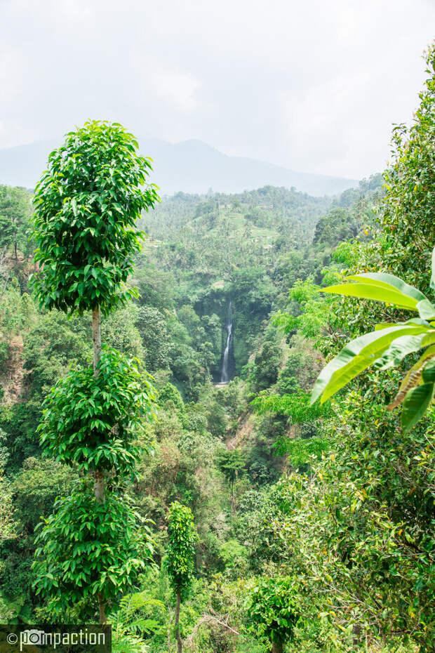 Секумпул - самый высокий водопад на Бали. Долгая дорога - не помеха!