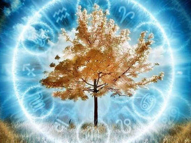 Ваше дерево-покровитель согласно гороскопу Друидов