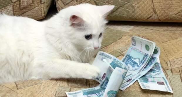 Благое дело — в ад: обязательная регистрация собак и кошек с 14 февраля