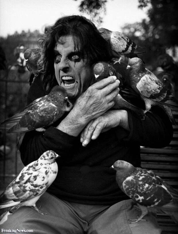 Элис Купер в голубях, 1980-е годы. история, ретро, фото