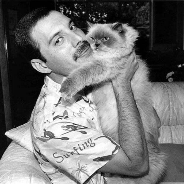 Знаменитости, которые обожали котиков