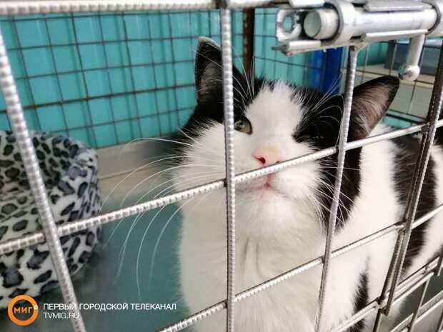 На Ямале подведены итоги Дня открытых дверей в приютах для животных