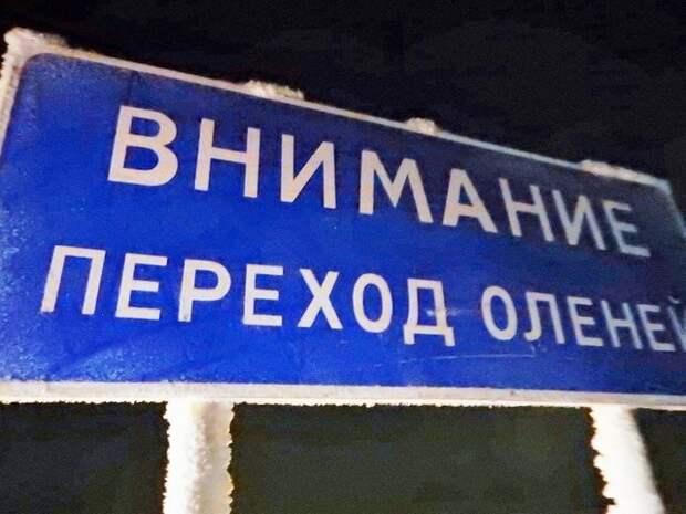 По зимникам на Запорожце. 5000 км под девизом «Ни дня без поломки!» авантюра, интересное, путешествие