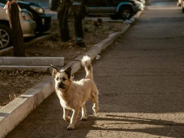Около 400 раз нападали собаки на забайкальцев за 2020 год