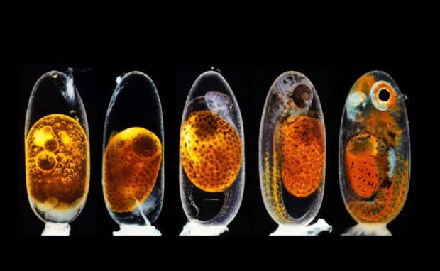 15 лучших микрофото года отпобедителей конкурса Nikon Small World Photomicrography 2020