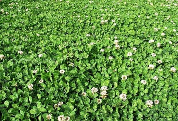 Чем заменить газон: 6 вариантов