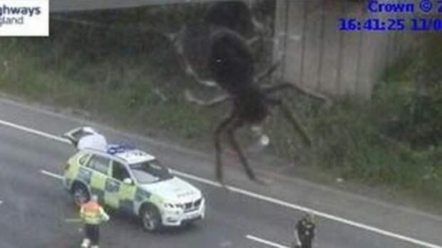 Фильм ужасов: Сеть напугал снимок с пауком, который нападает на машину