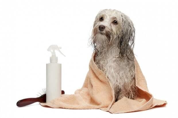 Вытирать собаку после купания