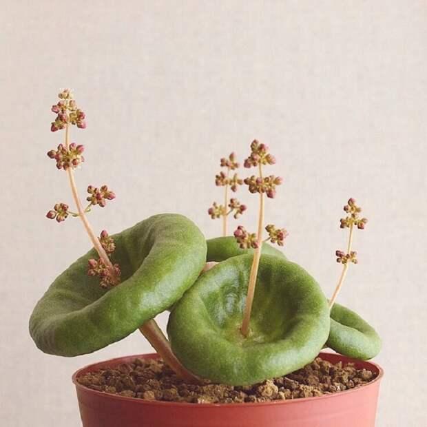 Красивое и необычное растение, которое сотворила природа.