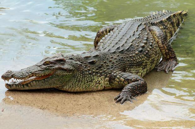 Крокодилы выбрались на свободу после потопа в Ялте