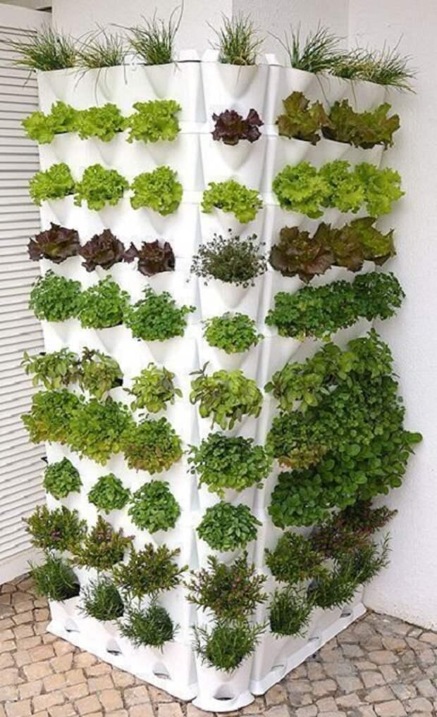 Оригинальное вертикальное озеленение не только украсят фасад дома, но и обеспечат зеленью.