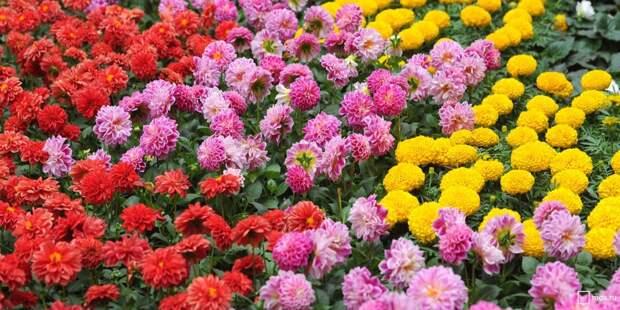 Один из самых необычных цветников в СЗАО высадили в парке «Дубрава»