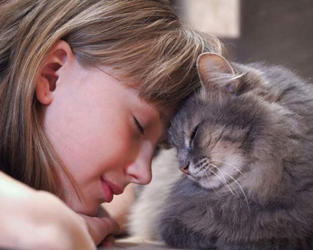 5 причин, по которым кошки лижут волосы хозяина