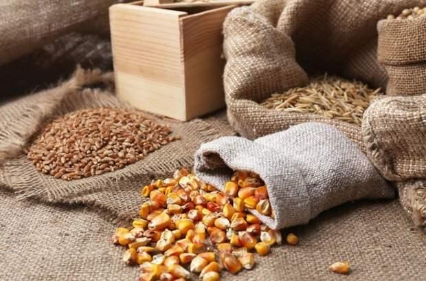 В чем хранить семена