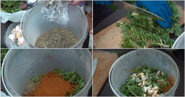 Рабочий раствор из самых простых трав: заменят химию на огороде и в саду