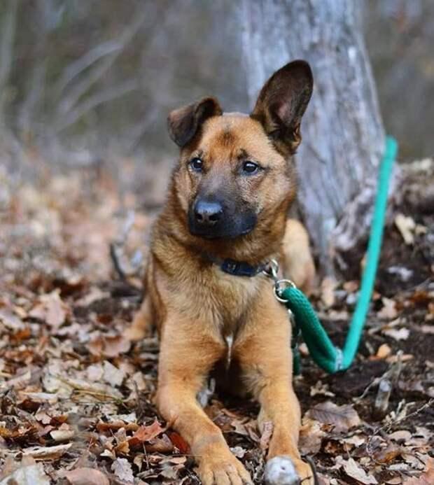 10 стран, которые имеют самые жёсткие законы по защите животных