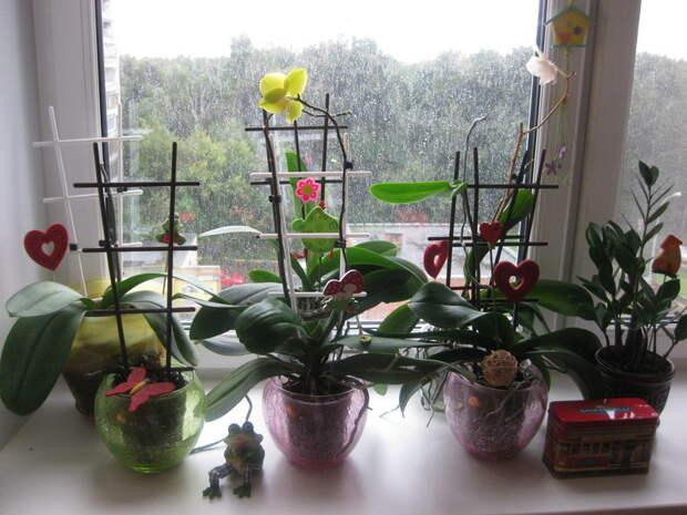 И ещё! истории, опасность, орхидея, цветы