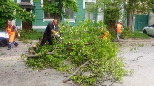 Поваленные деревья и оборванные провода: в Симферополе устраняют буйство непогоды