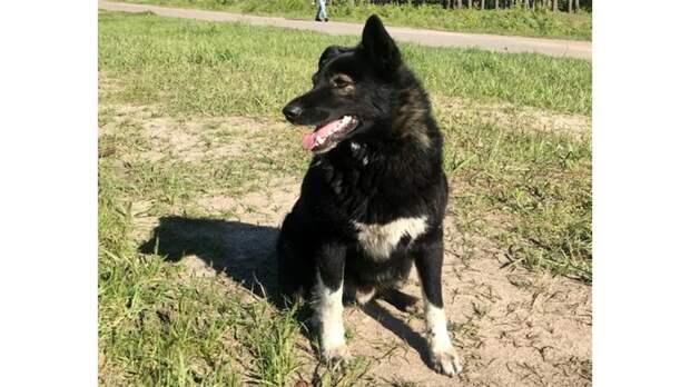 В Нижегородской области живет пес, за которым ухаживает целый район