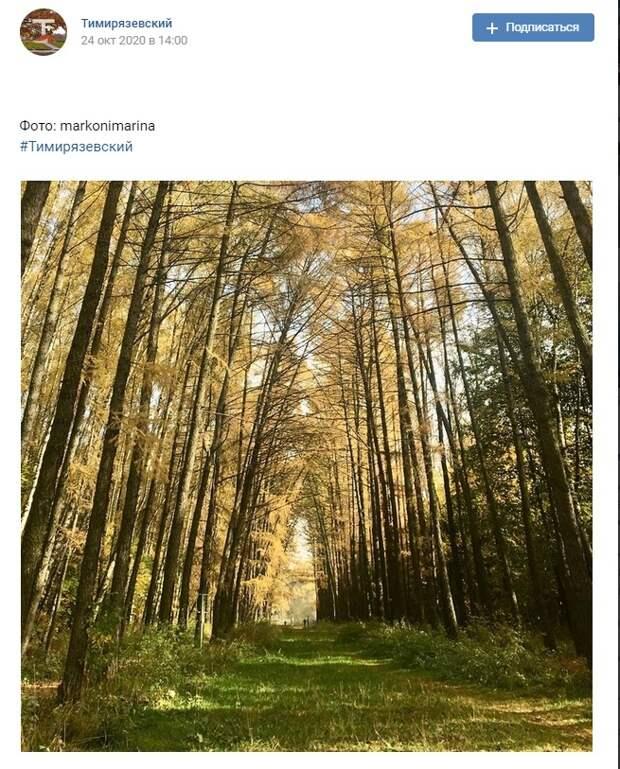 Фото дня: сказочный Тимирязевский лес