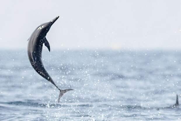 От белки до пингвина: 18 забавных фото, на которых запечатлены животные в прыжке