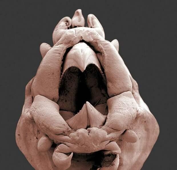 15 удивительных созданий которых неразглядеть без микроскопа