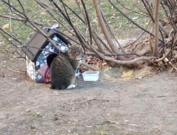 Жители Щукина построили деревянный домик для «ничейного» кота