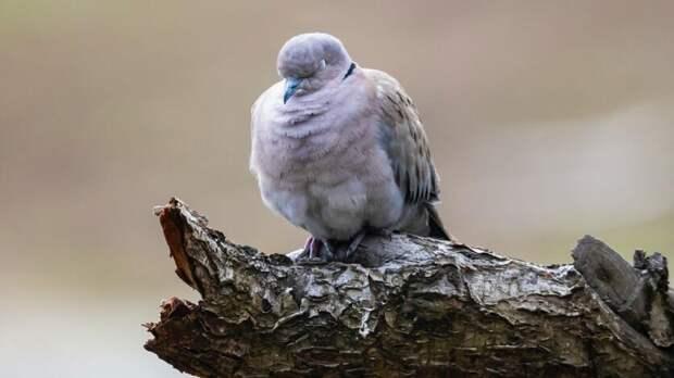 Украинским голубям запретили пересекать границу сРостовской областью