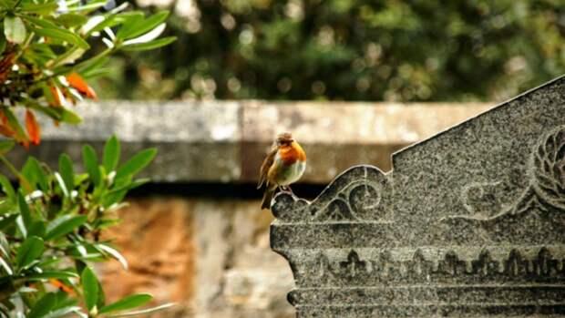 Барнаульцев не будут бесплатно возить до кладбища в Родительский день