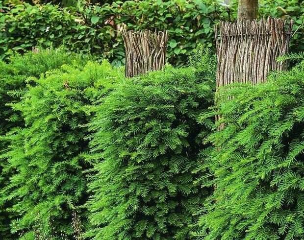 Используйте в качестве ограды комбинацию из кустарников и декоративных элементов, например из плетней.