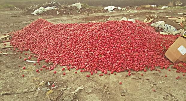 Краснодарские фермеры начали давить непроданный из-за пандемии урожай