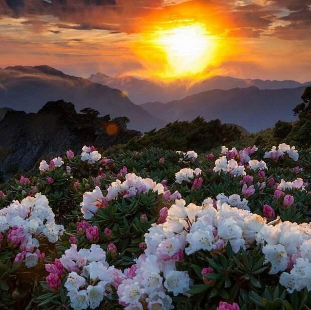 Позитивные и яркие фотографии из сети для летнего настроения