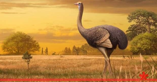 В пещере «Таврида» в Крыму нашли останки гигантской доисторической птицы