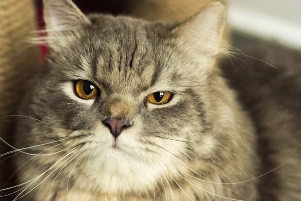 «Я веган и мой кот тоже», — после этих слов подружка забрала у хозяйки несчастное животное