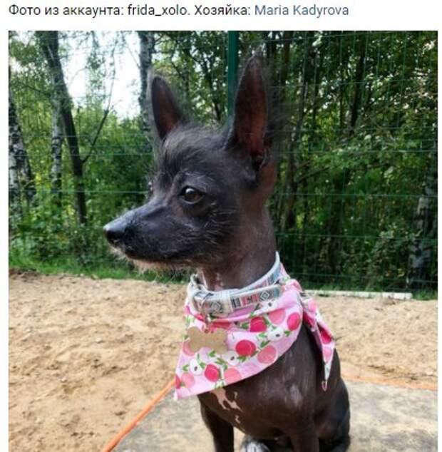 Заводчики из Молжаниновского протестировали площадку для выгула собак