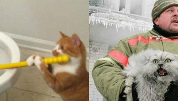 Продлевая жизнь: на этих котов невозможно смотреть безсмеха