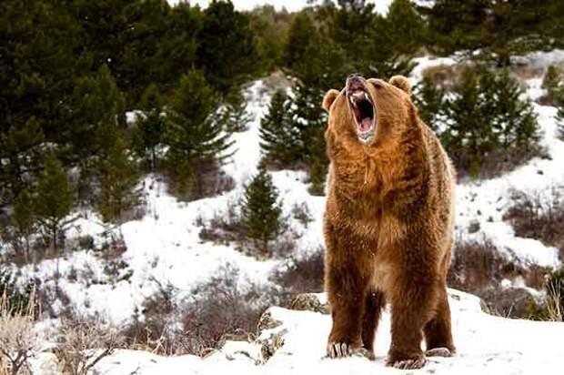 Медведь в традиции славян