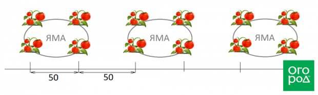 Посадка помидоров квадратно-гнездовым способом