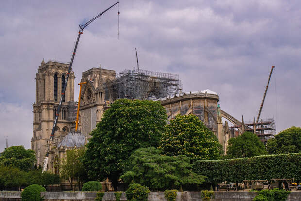 Двухсотлетние дубы пойдут на реставрацию Норт-Дама