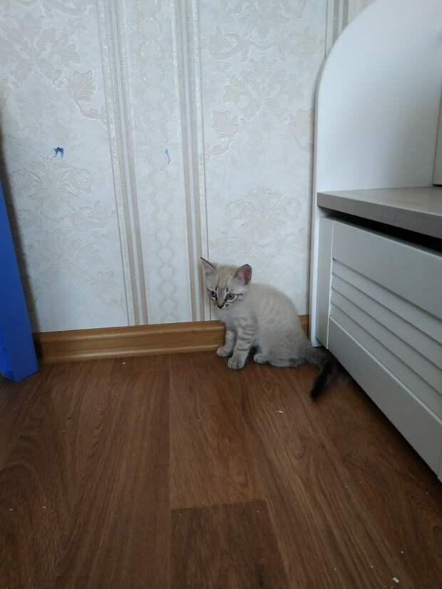 Девушка забрала домой котенка, надеясь, что старшая кошка хорошо его примет. Но та стала прогонять кроху прочь!