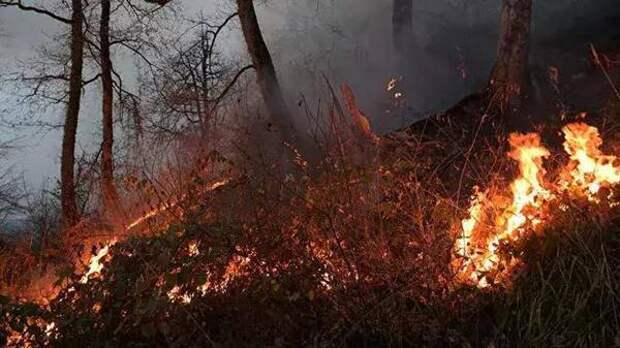 Трассу в Татарстане заволокло дымом из-за пожара. Видео