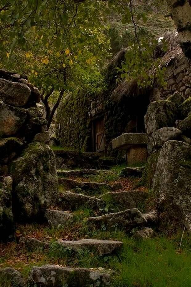 Не Шервуд, но лес