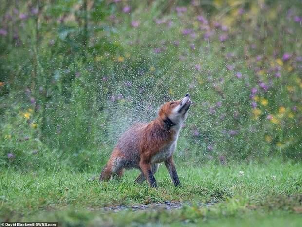 Победители конкурса фотографий дикой природы Essex Wildlife